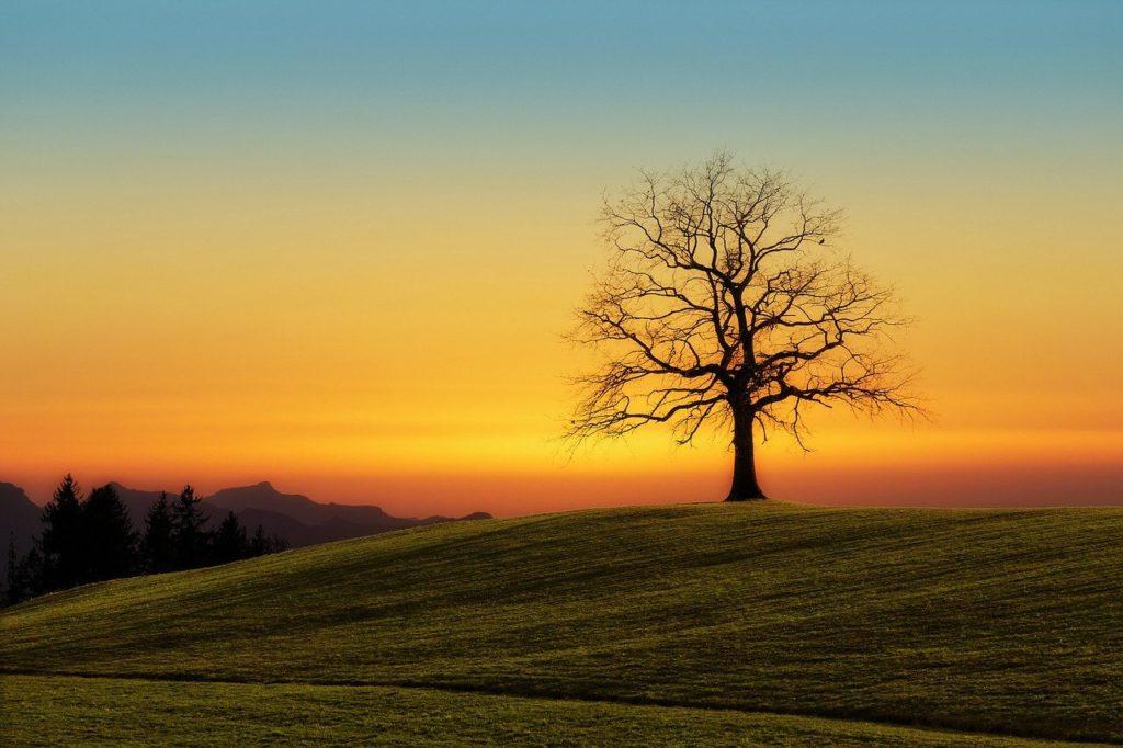tree, sunset, nature
